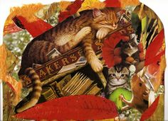 more Wysocki cats