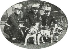 1927 - Descendants of Private Pagett USMC  The Marine Corps mascots that took part in the celebration of Armistice Day: Bill, Sergeant Thunder & Jiggs the second watch the Football game at Franklin Field in Philadelphia between the Quantico Marines & the American Legion All Stars.