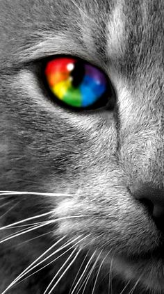 Rainbow colors ❖de l'arc-en-ciel❖❶Toni Kami Colorful kaleidoscope cat's eye color splash