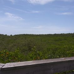 Over the Mangroves- mycrazylifeagain.com