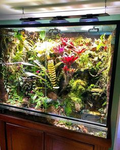 Edible Plants, Tree Frogs, Plant Decor, Animals And Pets, Habitats, Gardening, Landscape, Green, Wall