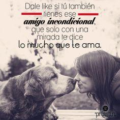 En honor de esos amigos incondicionales, que nos regalan amor todos los días #mascotas #perro #gato