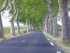 A road on the way to Beziers - platanes plantés par .... Napoléon !