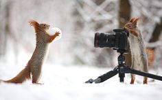 animal-factbook:  Since the nut supply has been lower lately, prices have gone up on the Nut Black Market, and Squirrels have been forced to turn to sensual modeling gigs, often taking place in grueling weather conditions, to make ends meet.