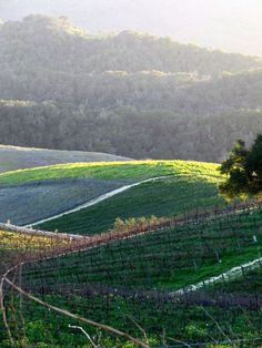 Photo Essay - Winter in the Vineyard... some beautiful pictures of wine country