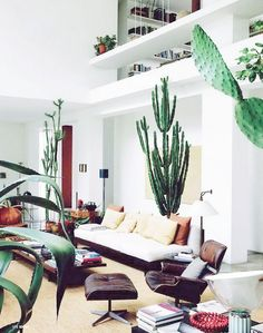 Southwest inspired living room with midcentury touches and large indoor cactus trees