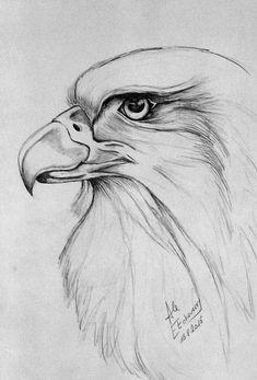 Tête d'aigle - - - recuperation bilder zitate Cool Art Drawings, Pencil Art Drawings, Art Drawings Sketches, Bird Drawings, Easy Drawings, Animal Drawings, Amazing Drawings, Disney Drawings, Eagle Drawing