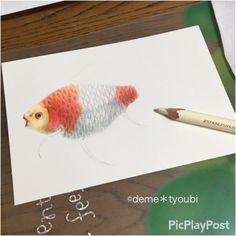 コメット  #kingyo #goldfish #fish #art #金魚 #色鉛筆 #色鉛筆画 #colorful #moor #アクアリウム #aquarium #アート #芸術 #水草 #photooftheday #webstagram #handmade #colorpencil #イラスト #illustration #illust #メイキング #コメット #彗星