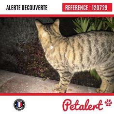 Cette Alerte est désormais close : elle n'est donc plus visible sur la plate-forme www.petalert.fr. Plus revu Merci pour votre aide.