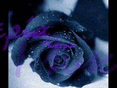 Show purple rose flowers hd wallpaper and picture. Information about purple rose flowers. Rose flowers is one of popular flower in United State. Purple-colored roses are very beautiful and luxurious look. The Purple, Purple Stuff, All Things Purple, Purple Rain, Shades Of Purple, Purple Glitter, Pink Black, Hot Pink, Love Rose