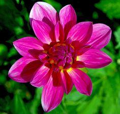 Fleur du jardin de Michel