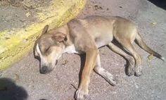 Αποτέλεσμα εικόνας για αδεσποτα σκυλια Dogs, Animals, Animales, Animaux, Pet Dogs, Doggies, Animal, Animais