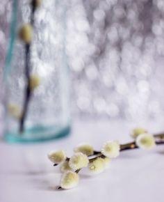 Fluffy willow by VinaApsara on DeviantArt Deviantart, Photography, Photograph, Photo Shoot, Fotografie, Fotografia