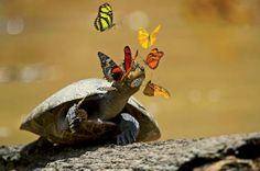 Butterflies Drink Turtle Tears, And More Amazing Images Of The Week | Popular Science
