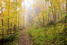 Aspen Photograph - Foggy Winsor Trail Aspens In Autumn - Santa Fe National Forest New Mexico by Brian Harig Mexico Art, New Mexico, Santa Fe National Forest, Aspen Leaf, Save Nature, Autumn Scenes, Land Of Enchantment, Beautiful Forest, Lovers Art