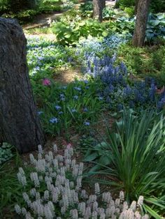 A  subtle mix of shade loving perennials adds a touch of tranquility to this garden.