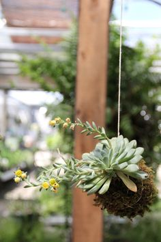 Weekend project idea: DIY Hanging Kokedama Plant.