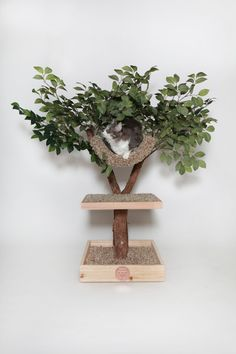 "28"" Seedling Cat Tree / PetTreeHouses on Etsy"