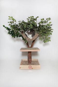 Seedling Cat Tree via Etsy. Neutral Carpet, Carpet Colors, Grey Carpet, Cat Tree House, Tree Houses, Alaska, Indoor Trees, Cat Room, Play Centre