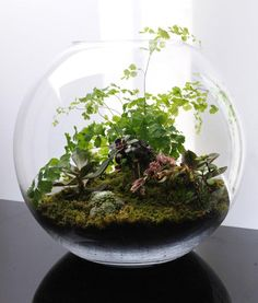 Open terrarium using succulents and tropicals
