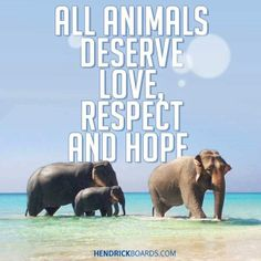 Today, we have partnered with more than 350 local shelters, rescues and sanctuaries across the nation. With each and every purchase made, Hendrick Boards donates to save an animal in need. A simple tee CAN make a difference.    HENDRICK BOARDS