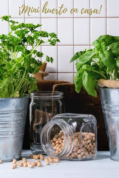 ¿Te gustaría tener un huerto en casa? Fantásticas ideas para tener tus frutas, hortalizas o plantas aromáticas siempre a mano #ideasdecoración #huertoencasa #diy