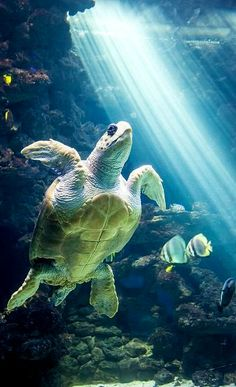 Sea Turtle.