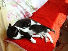 Jurnalul unei pisici independente: Cronica lunii trecute Beast, Friends, Animals, Amigos, Animales, Animaux, Animal, Animais, Boyfriends