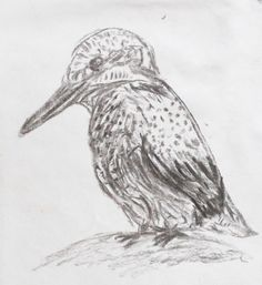 kingfisher charcoal drawing