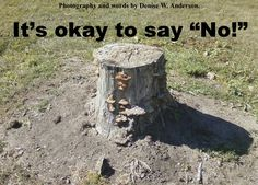 """We don't have to always say """"Yes."""""""