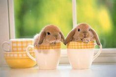 Bunnies in tea cups. CUTE! ✌️❤️❤️❤️❤️