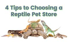 There is more to choosing a reptile pet store than browsing their inventory.  #ReptilePetStore #SnakesforSale #BuySnakesOnline #LizardsforSale #OnlineReptiles #OnlineReptileStore #ReptilesOnline #SnakeBreedersOnline #BuyReptiles #BuySnakes #BuyLizards #BuyGeckos #StrictlyReptiles #PetReptiles