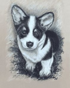 Items similar to Corgi Puppy Giclee. Original drawn in black and white Charcoal. x or x Giclée Art Print on Etsy Short Dog, Emergency Vet, Dog Spay, White Charcoal, Black And White, Easy Drawings, Dog Drawings, Dog Portraits, Pet Store