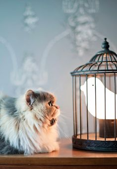 it's a cat lamp Crazy Cat Lady, Crazy Cats, Cat Lamp, I Can Haz, Video Chat, Photo Chat, Cat Photography, Cute Creatures, Cool Cats