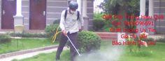 Công ty diệt côn trùng hiệu quả