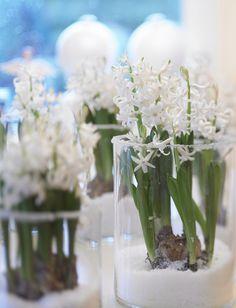 kukkainfo.fi -> horoskooppikukka -> hyasintti=jousimies Glass Vase, Table Decorations, Flowers, Christmas, Furniture, Design, Home Decor, Lavender, Xmas