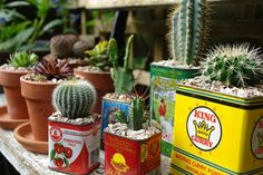 H is for Home's collection of small succulents & cacti in food tins & terracotta pots on a bench in the garden