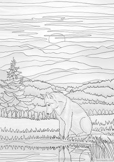 Wobbegong Shark coloring page from Sharks category. Select ...