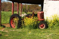 Old tractors and pretty flowers <3