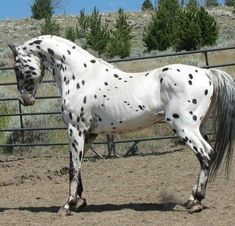 I wish I had a horse that looked like this