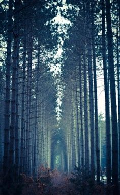 trees     Cathedral !