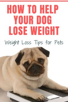 Effective Methods How to Help Your Dog Lose Weight – Weight Loss Tips for Pets How to Help Your Dog Lose Weight – Weight Loss Tips for Pets. Wrap Around PorchesHow to Help Your Dog Lose Weight – Weight Loss Tips for Pets. Wrap Around Porches Fast Weight Loss Tips, Weight Loss Blogs, Losing Weight Tips, Weight Loss Goals, Weight Loss Program, Healthy Weight Loss, How To Lose Weight Fast, Detox Cleanse For Bloating, Liver Detox