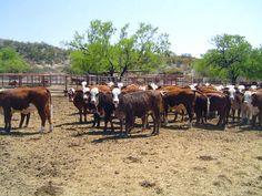 Pregon Agropecuario :: PARAGUAY: LAS INVERSIONES GANADERAS LLEGAN A US$ 3.155 MILLONES EN 10 AÑOS - Ganadería Bovina - Columnas de Opinión