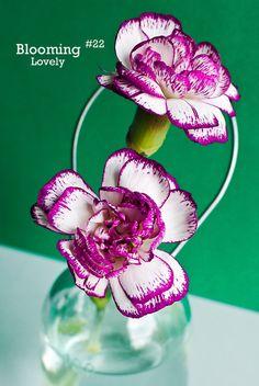 Blooming Lovely #22 - Carnation