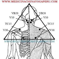 TRIÁNGULO DE LA ANGUSTIA Y TENSIÓN Los siguientes puntos energéticos son recomendados para calmar las tensiones mentales, relajar la musculatura de la zona alta de la espalda y liberar la angustia. Se trata de ejercer presiones con los dedos pulgares en cada par de puntos por 5 segundos para luego soltar (7 veces). Pídale a un familiar querido que le haga la terapia para un mejor efecto.