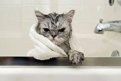 not amused..