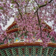 【xzsa12755168】さんのInstagramをピンしています。 《美景變絕景,櫻王再見 辛苦了謝謝它帶給我們這麼多回憶 #台灣 #淡水 #天元宮 #櫻花 #Taiwan #NewTaipeiCity #Tamsui #Cherryblossoms #memory #Memories》