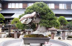 800 years old Kunio Kobayashi.