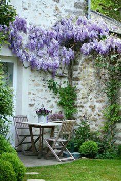 Trained wisteria