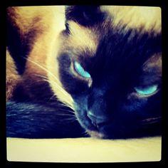 Olhar Felino
